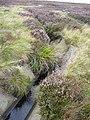 White Holme Drain, Blake Moor, Mytholmroyd - geograph.org.uk - 1470592.jpg