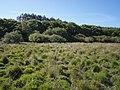 Whiteleigh Meadow - geograph.org.uk - 511802.jpg