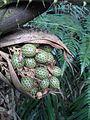 Wild nuts.jpg