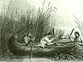 Wild rice harvesting 19th century.jpg