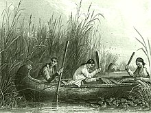 wild rice wikipedia