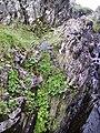 Wildflowers, Watendlath - geograph.org.uk - 454609.jpg