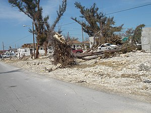 Effects of Hurricane Wilma in The Bahamas - Fallen trees in the Freeport area