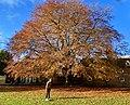 Winchester in Autumn, England; November 2020 (06).jpg