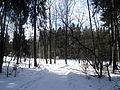 Winter Radonezh 2.jpg