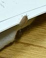 Wood louse (Isopoda) suborder, pill bug (Armadillidiidae).jpg