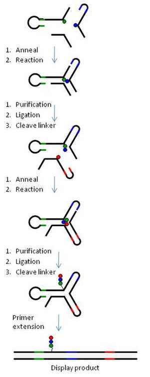 DNA-encoded chemical library - Fig. 6 YoctoReactor library assembly. Stepwise assembly of a DEL library using YoctoReactor technology. A 3-way reactor is shown here. (a) Position 1 (P1) and P2 BB are brought into proximity and undergo a chemical reaction in the presence of a helper oligonucleotide in P3. (b) The structure is purified by polyacrylamide gel electrophoresis (PAGE), the P1 and P2 DNA is ligated and the P2 linker is cleaved. (c) P3 BB is annealed to the P1-P2 ligation product from step b, and a chemical reaction between P2 and P3 BBs takes place. (d) The reaction product is purified by PAGE, the DNA is ligated and P3 linker is cleaved yielding a compound (OOO) covalently attached to the folded yR. (e) The yR is dismantled by primer extension yielding a double-stranded display product exposing the reaction product for selection and molecular evolution.