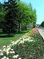 Young Guard Park tulips.jpg