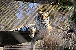 Zoo de Lisboa by Juntas 55.jpg