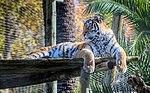 Zoo de Lisboa by Juntas 56.jpg
