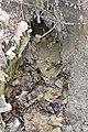 Ботанічний (Паньківський) струмок 04.jpg