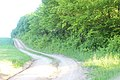 Ботанічний заказник у селі Давидківці.jpg