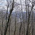 Долина реки Бурункуля (13) - panoramio.jpg