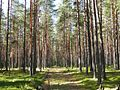 Лес mežs - panoramio (2).jpg