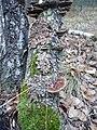 Лишайники на стволе дерева 1.jpg
