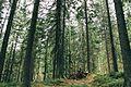 Ліс на лінії Арпада.jpg