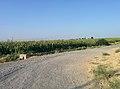 Майский посёлок - panoramio (4).jpg