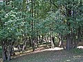 Макарово дорога к п. Девичья - panoramio - Kudrjashov Andrey.jpg