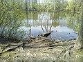 Мраморный пруд в мае.jpg