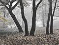Танец в тумане - panoramio.jpg