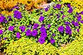 Цветок ботанического сада 06.jpg