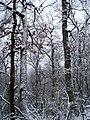 Чернечий Ліс 8.jpg
