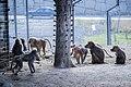 مجموعه عکس از رفتار میمون ها در باغ وحش تفلیس- گرجستان 10.jpg