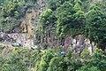 新丰司茅坪林场20150412 - panoramio (18).jpg