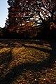 明治神宮 - panoramio (6).jpg