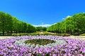 昭和記念公園 - panoramio (15).jpg