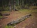 枯木 - Dead Wood - 2011.10 - panoramio.jpg