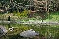 蚕糸の森公園の亀 Turtles in Sanshi no Mori Park - panoramio.jpg