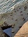 蟹蟹你.jpg