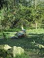 - ITALY - Tigre Siberiana - Parco Natura Viva - Verona 1.JPG