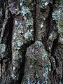 130106 lichens luis figueroa.JPG