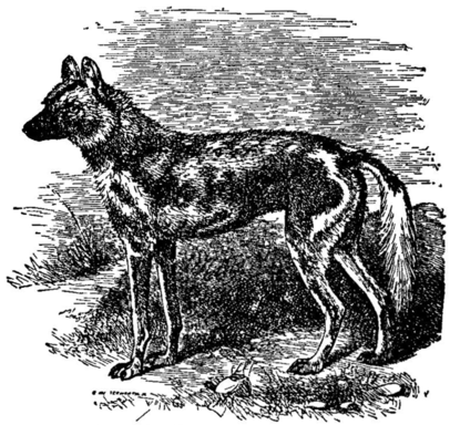 1911 Britannica - Hunting Dog.png