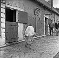 1958 visite d'une délégation INRA au Haras du Pin Cliché Jean Joseph Weber-6-1.jpg