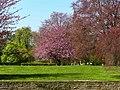 2004-04-16-bonn-stadtgarten-04.jpg