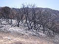 2007 Catalina Burn.jpg