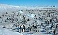 2007 Snow-Hill-Island Luyten-De-Hauwere-Emperor-Penguin-79.jpg