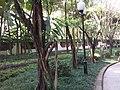 2008碧津公园围墙 - panoramio.jpg