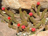 2008 07 Botanical Garden Meran 71600R0407