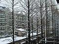 2010年的第一场雪 - panoramio.jpg