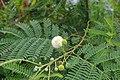 2012-10-22 14-18-18 Pentax JH (49278303257).jpg