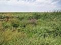 2015.09.05 12.47.40 DSC00313 - Flickr - andrey zharkikh.jpg