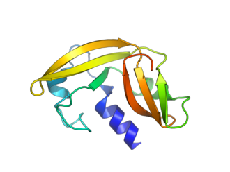 Amphinase - Crystallographic structure of amphinase.