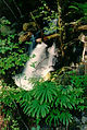 4-Fern Falls 1.5 from Trailhead (16189804366).jpg