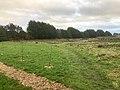 9850.Roege.Bos.DeHeld.Westpark Aanleg Tiny Houses Crematorium 2020.jpg