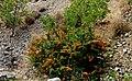 A@a agios theodoros area limassol cy - panoramio (9).jpg