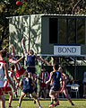 AFL Bond University Bullsharks (17523923054).jpg